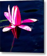 The Water Lily... Metal Print