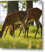 The Whitetail Deer Of Mt. Nebo - Arkansas Metal Print
