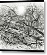 The Wicked Trees Metal Print