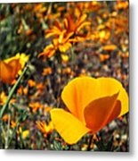 The Wildflowers Are Here And Spring Has Arrived Metal Print