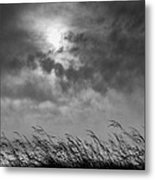 The Wind That Shakes The Grass Metal Print