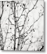 The Winter Pear Tree In Black And White Metal Print