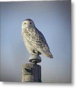 The Wise Snowy Owl Metal Print