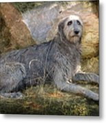 The Wolfhound  Metal Print by Fran J Scott