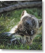 The Wolverine Skunk Bear Happy Face Metal Print