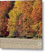 The Wonder Of Fall Metal Print