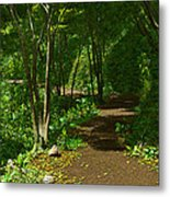 The Wooded Path... Metal Print