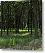The Woods And The Road From The Series The Imprint Of Man In Nature Metal Print