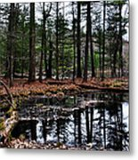The Woods Reflected Metal Print
