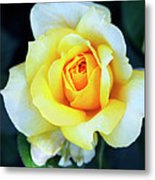 The Yellow Rose Palm Springs Metal Print