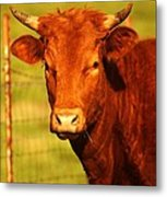 The Young Bull Metal Print by Adam Dowling