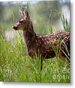 The Young Prince Metal Print