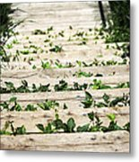 There Is No Stopping Nature Metal Print