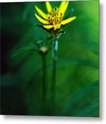 There's A Secret World Metal Print