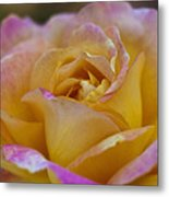 There's Nothing Like The Beauty Of A Rose  Metal Print