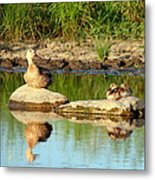 These Ducks Rock Metal Print