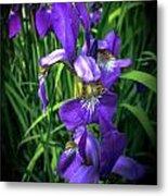 Colors Of Iris Metal Print