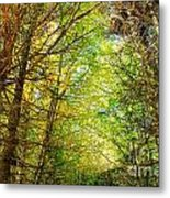 Thick Forest Hdr Metal Print