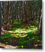Thicket-like Woods And Spongy Moss Near Lobster Cove In Gros Mor Metal Print