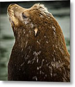 Things Are Looking Up-sealion Metal Print