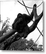 Thinking Of You Black And White Metal Print