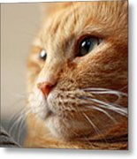 Thinking Outside The Box Metal Print