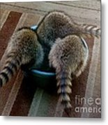 Thirsty Babies Metal Print by Jacquelyn Roberts