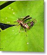 Thirsty Bee On Waterlily Metal Print