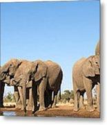 Thirsty Elephant Herd Metal Print