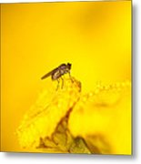 Thirsty Fly Metal Print by Sarah Crites