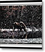 Thirsty Moose Impressionistic Painting With Borders Metal Print