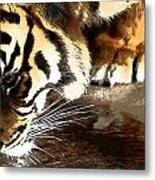 Thirsty Tiger Metal Print