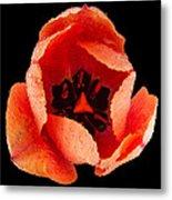 This Dordogne Tulip Metal Print