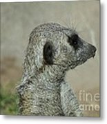 This Is My Best Side Metal Print by Donna Parlow