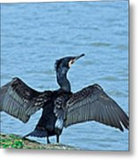 This Is My Part Of The Lake Metal Print