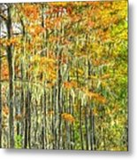 This Is What Autumn Brings Metal Print