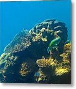 This Is Why They Call It The Great Barrier Reef Metal Print