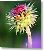 Thistle And Company Metal Print