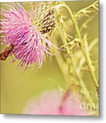 Thistle And Friend Metal Print
