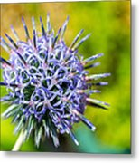 Thistle Metal Print by Andrew Lalchan