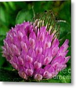 Thistle Beauty Metal Print