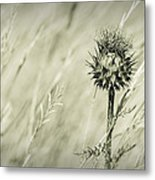 Thistle - Dreamers Garden Series Metal Print