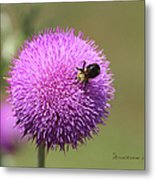Thistle And A Bee Metal Print