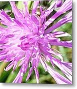 Thistle In Umbria Metal Print