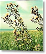 Thistle On The Beach  Metal Print