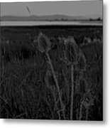 Thistles At Ninepipes Metal Print