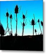 Thistles At Sunset Metal Print