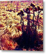 Thistles In A Summer Field Metal Print