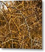 Thorn Bush Metal Print