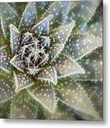 Thorny Succulent Metal Print